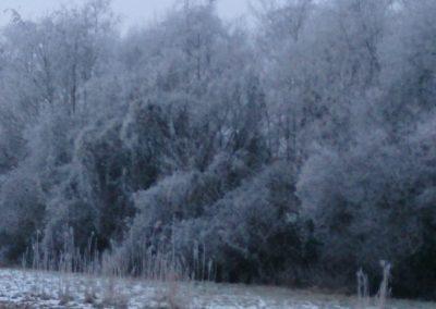 Vogelhorst Bomen in de mist