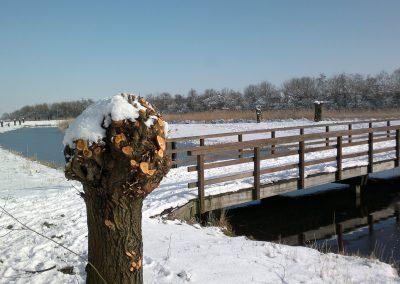 Vogelhorst Sneeuw Zwaansvijver