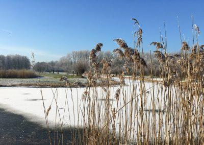 Vogelhorst Winter Zwaansvijver